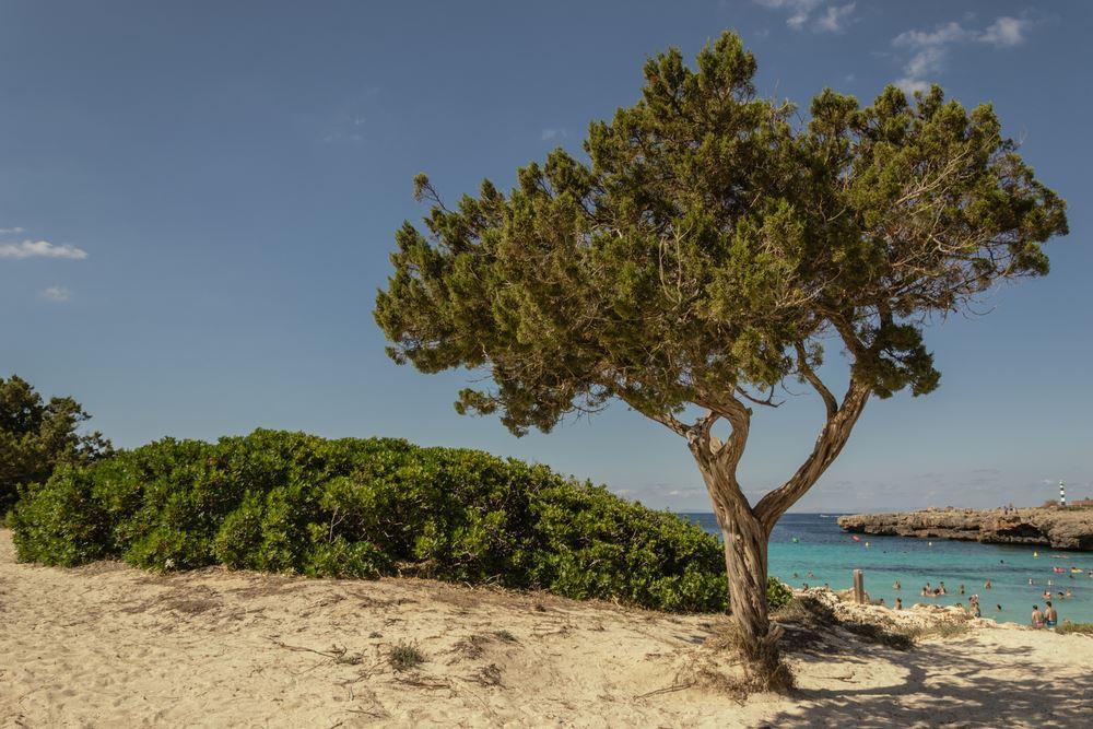 Cala en Bosch en Menorca