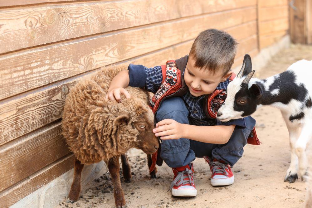 Zoológico de mascotas (Niño)