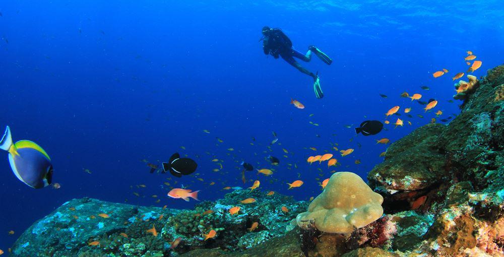 Buceo en Menorca